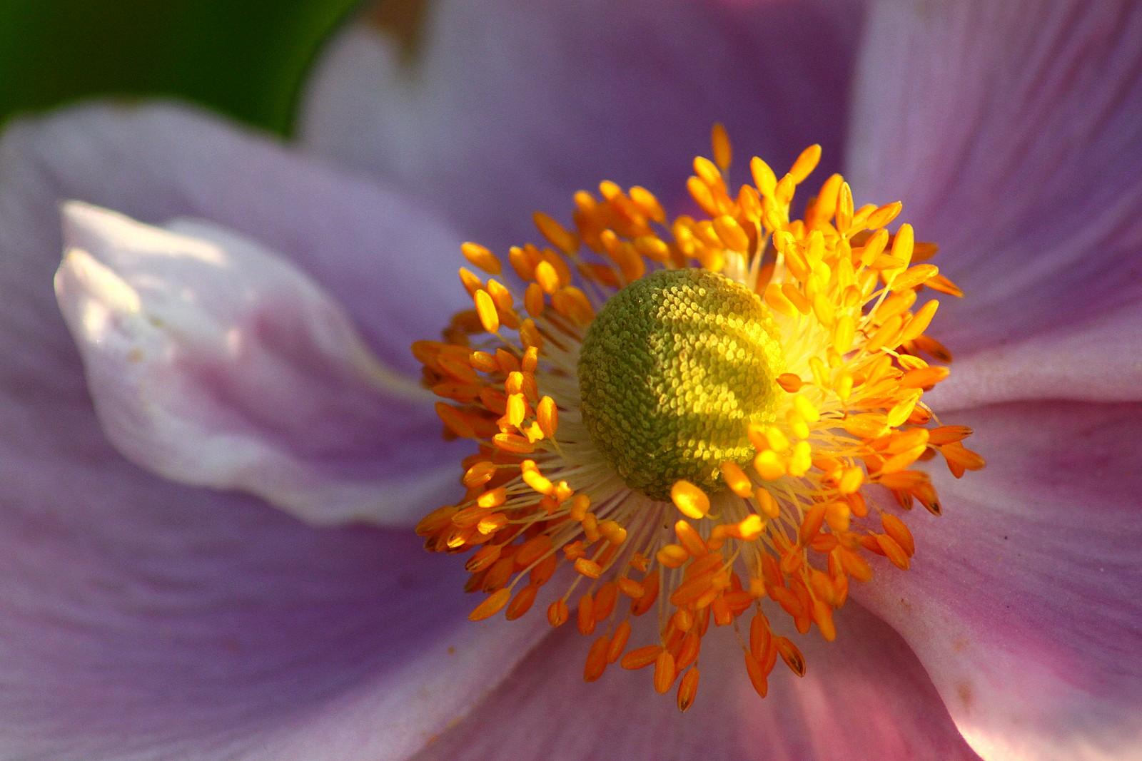 Some kind of flower