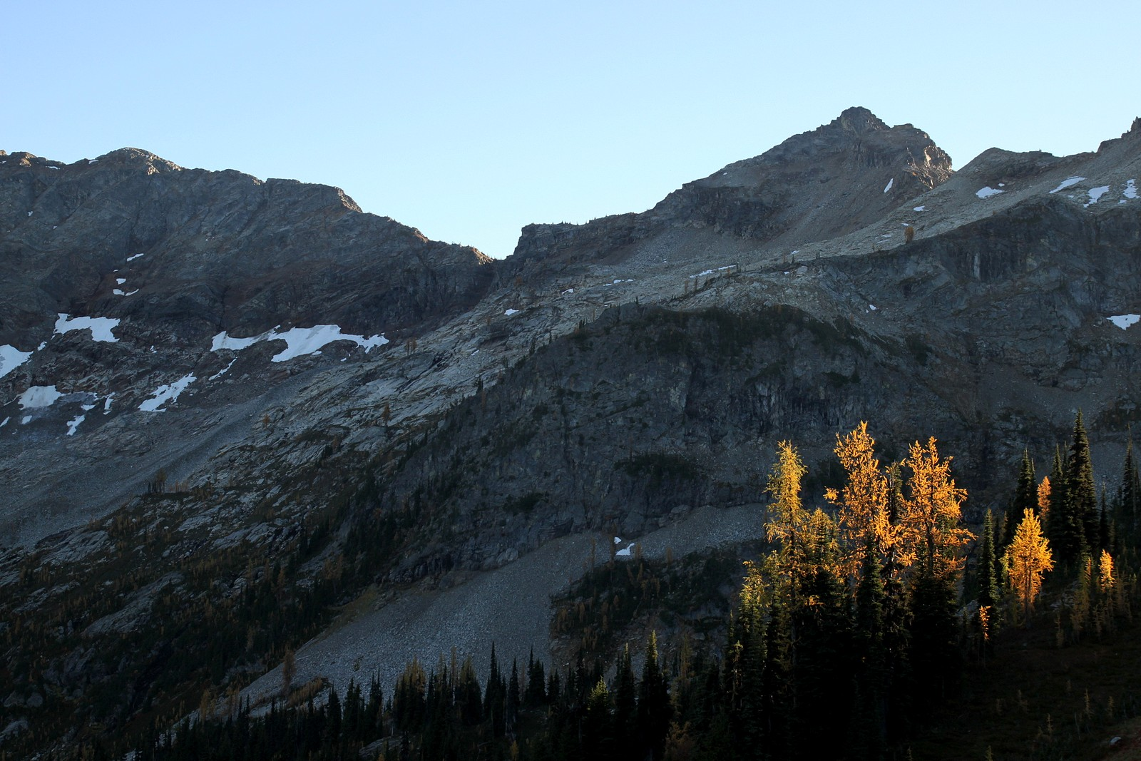 Larches near Maple Pass