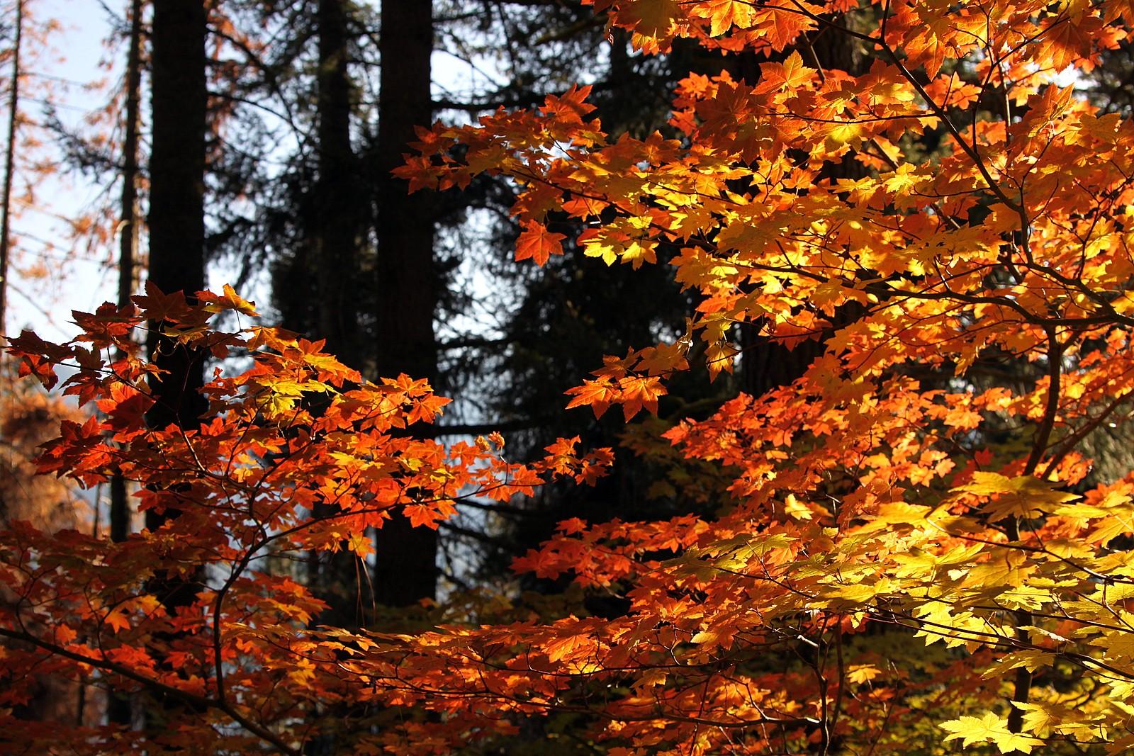Fall color on the Merritt Lake trail