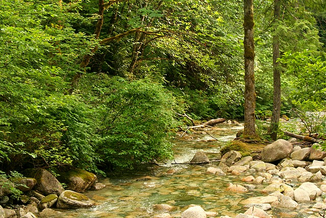 Shannon Creek, Squamish, BC