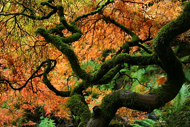 Kubota Garden, Seattle, Washington