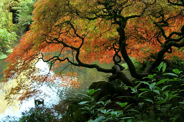Autumn in the Kubota Garden<br>Seattle, Washington<p>Camera: Canon EOS Rebel XT<br>Tamron 28-300 mm VC lens