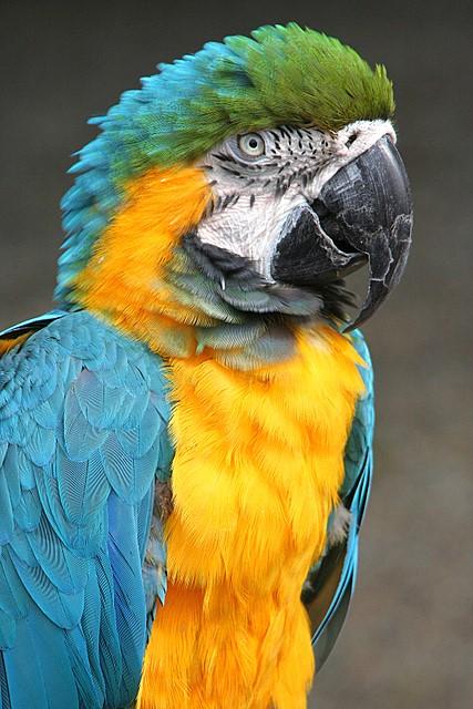 Parrot<br>Cougar Mountain Zoo<br>Issaquah, Washington<p>Camera: Canon EOS Rebel XT<br>Tamron 28-300 mm VC lens