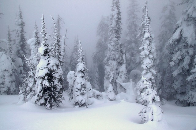 Snow Ghosts in the fog<br>Whitefish Mountain Resort<br>Whitefish, Montana<p>Camera: Canon EOS Rebel T1i<br>Tamron 17-50mm lens