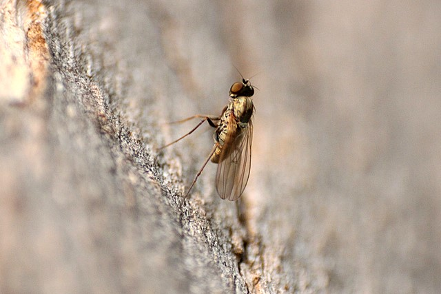 Gnat<p>Camera: Canon EOS Rebel T1i<br>Reverse mounted 18-55 mm kit lens<br>1600 ISO