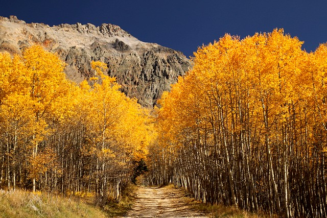 Ophir Pass in Autumn