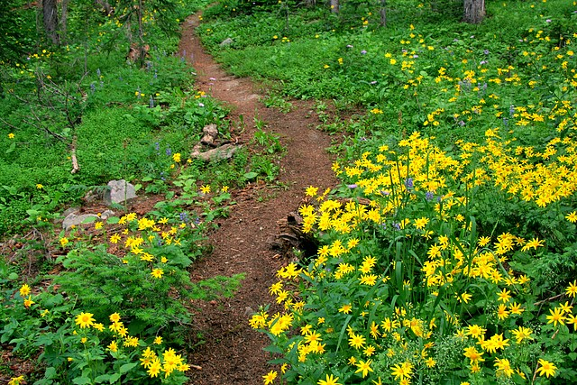 Hahn's Peak Trail<br>Near Steamboat Springs, Colorado<p>Camera: Canon EOS Rebel XT<br>Tamron 28-300mm VC lens