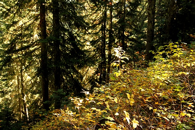 Fall on the Maple Pass / Lake Ann Trail<p>North Cascades National Park<br>Washington State<p>Camera: Canon EOS Rebel T1i<br>Tamron 17-50mm f/2.8 lens