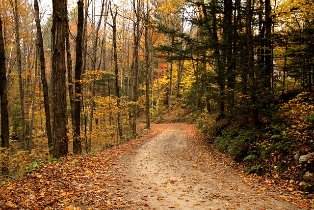 Autumn in Vermont<p>Camera: Canon EOS Rebel T1i<br>Tamron 17-50mm f/2.8 lens