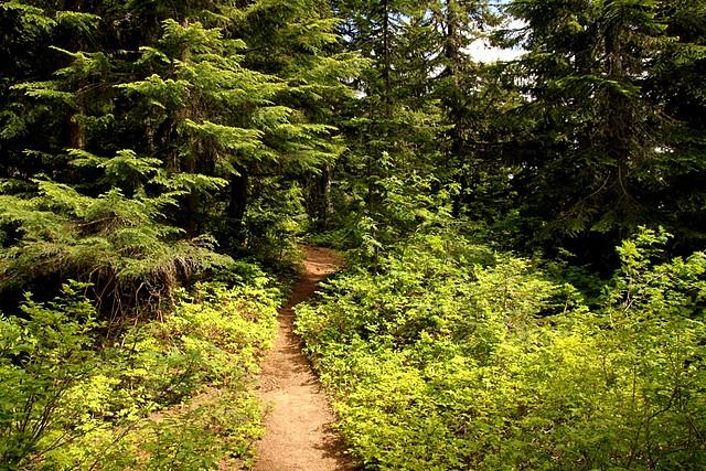 Tonga Ridge Trail